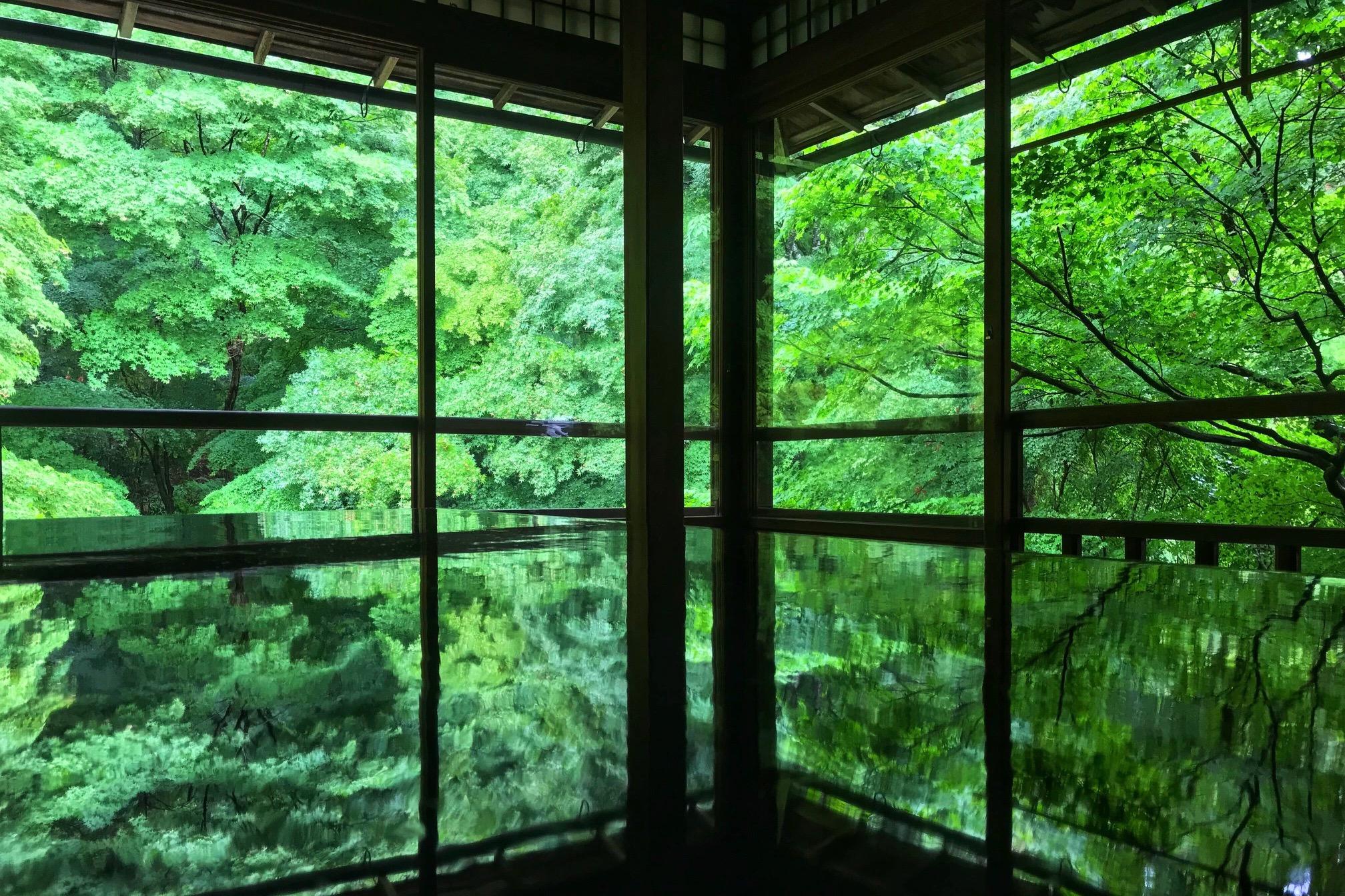 樱花过后,又见古都添新绿--初夏来京都赏青枫