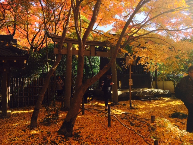 ~Series③~ Kyoto's autumn, we recommend  ...
