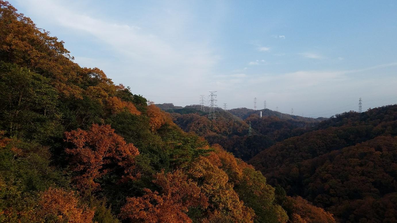 Autumn leaves spots!!