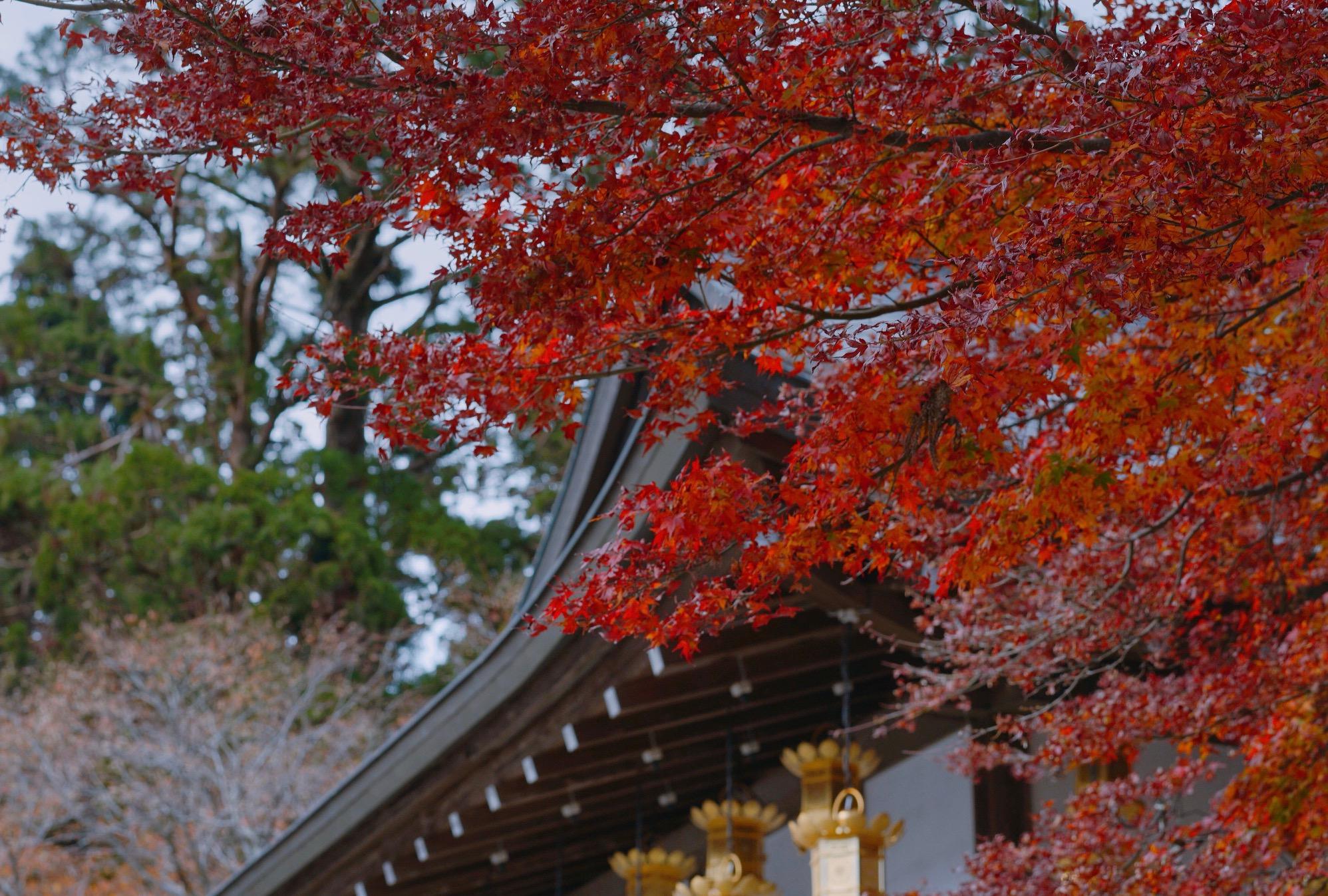 Mountain Hiei, hiking and enjoying autumn ...