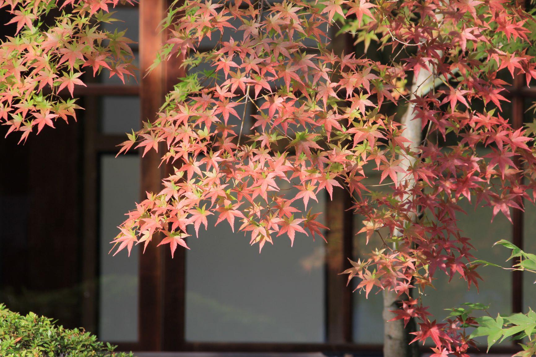 京都有名的红叶观光景点